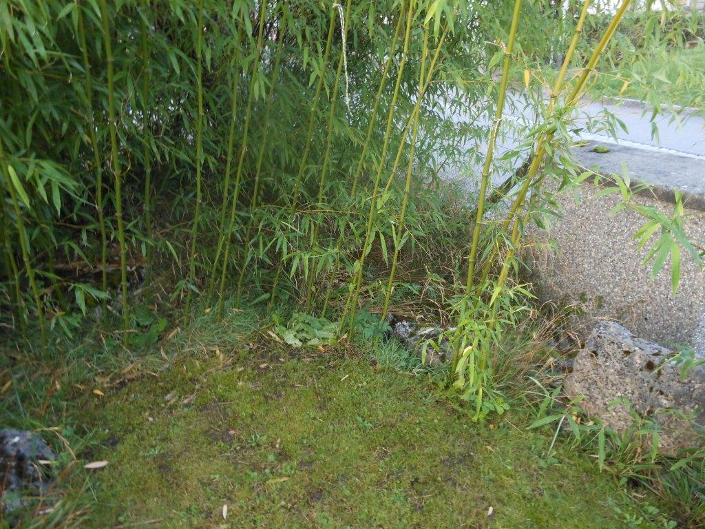 Bambus Im Garten Vernichten : bambus vernichten bambus im garten vernichten bambus ~ Michelbontemps.com Haus und Dekorationen