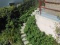 Knöterich im Garten.JPG