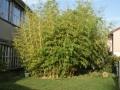 Bambus 04.jpg